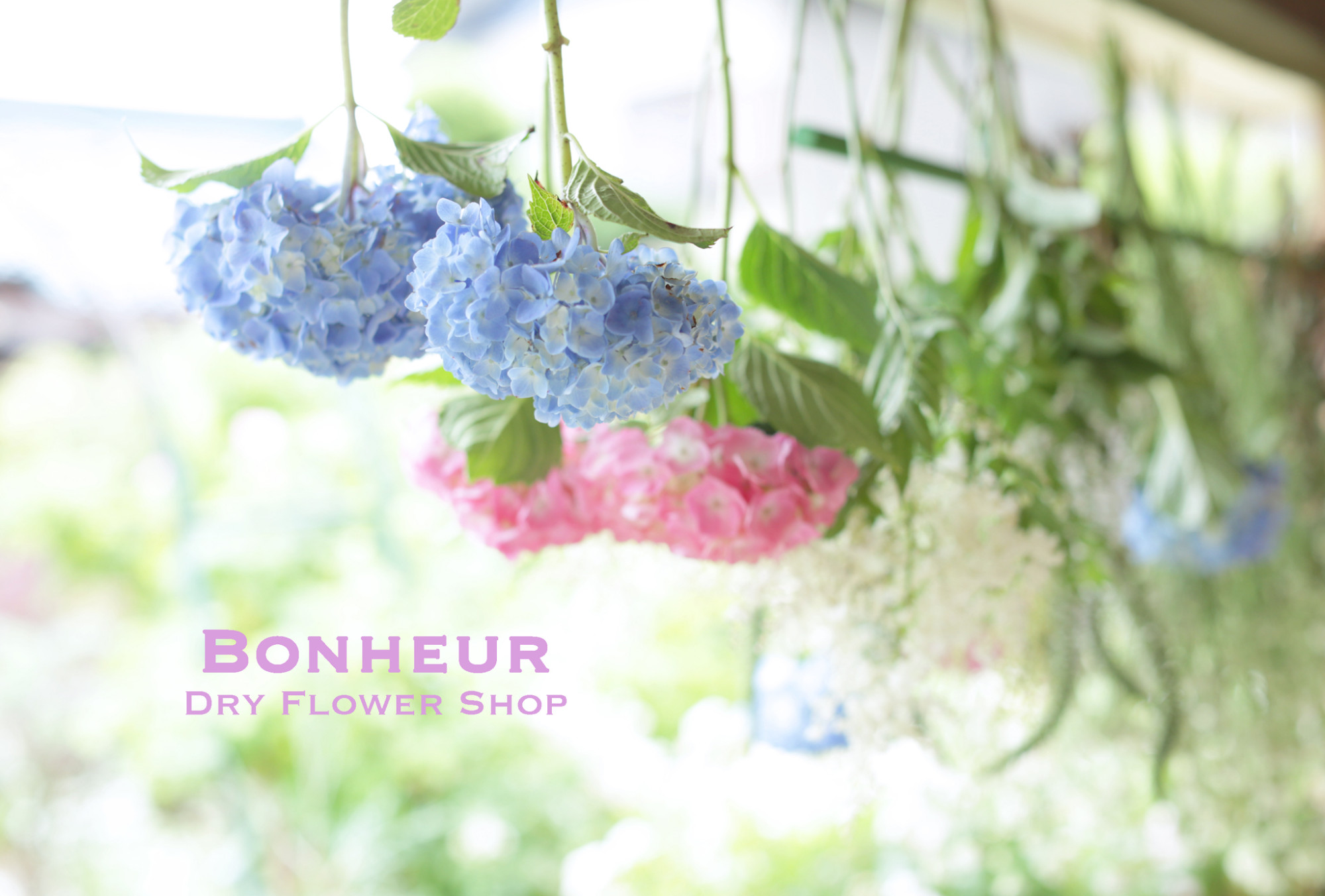 b_flower20180530_1
