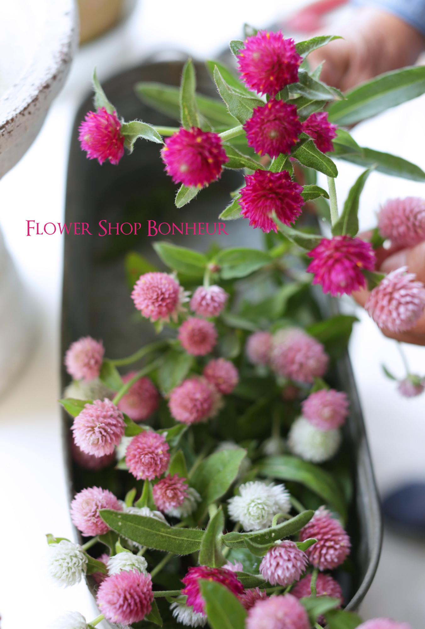 b_flower20180531_2