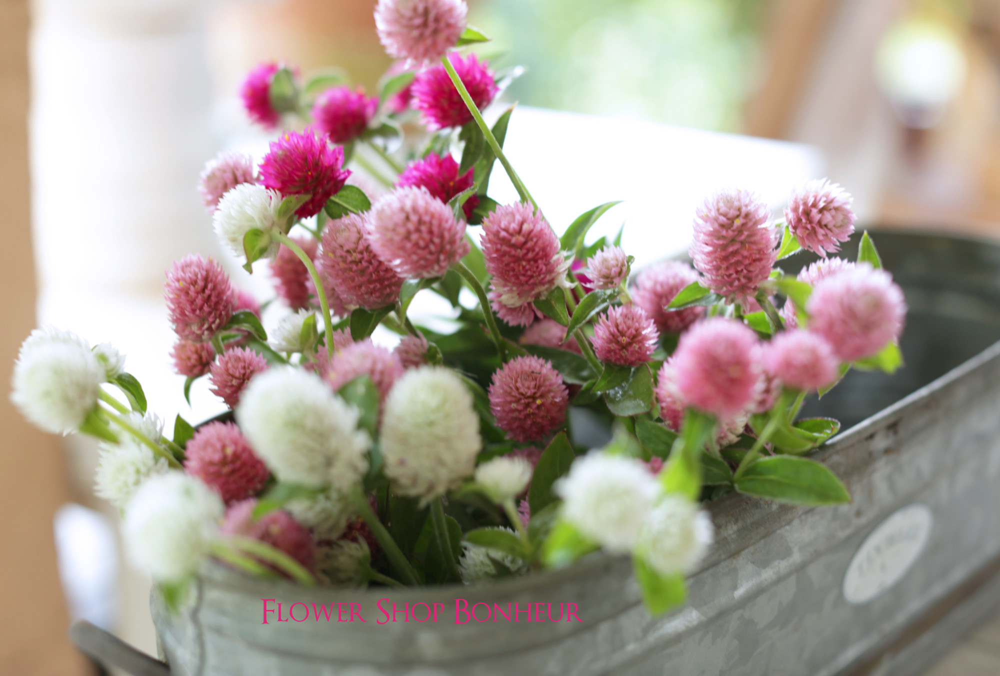 b_flower20180531_3